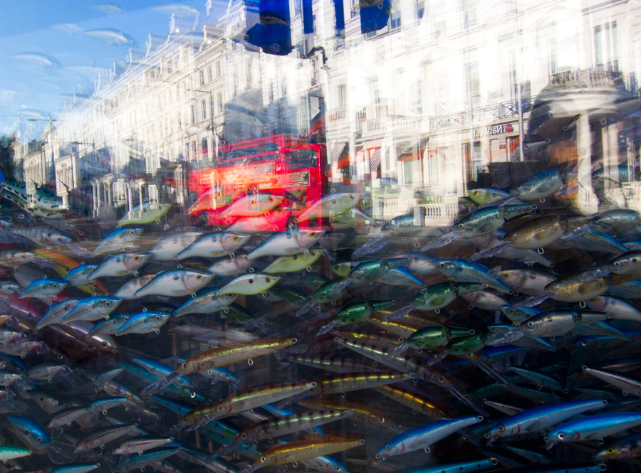 Fish-reflection-Ludwig-Haskins-01.jpg