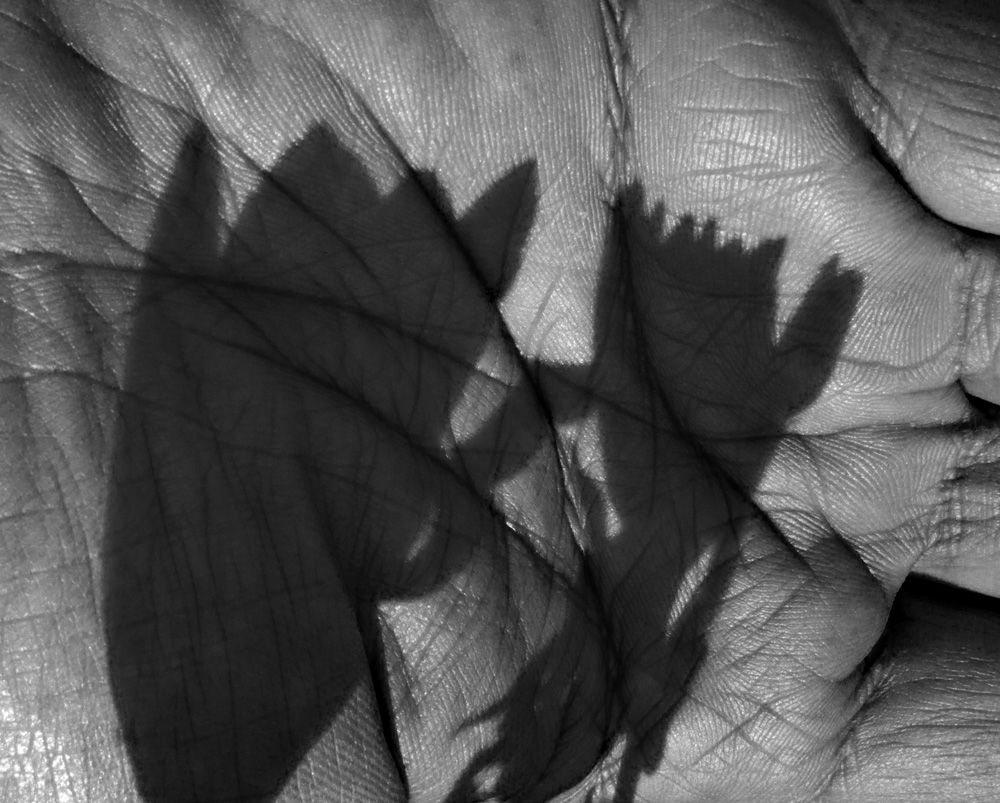 Hand-Shadow-01-BW.jpg