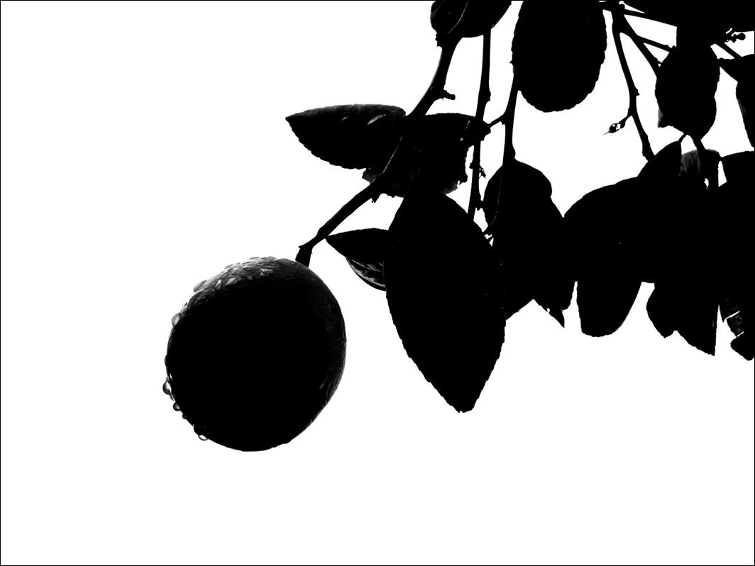 Lemon-01B-BW.jpg