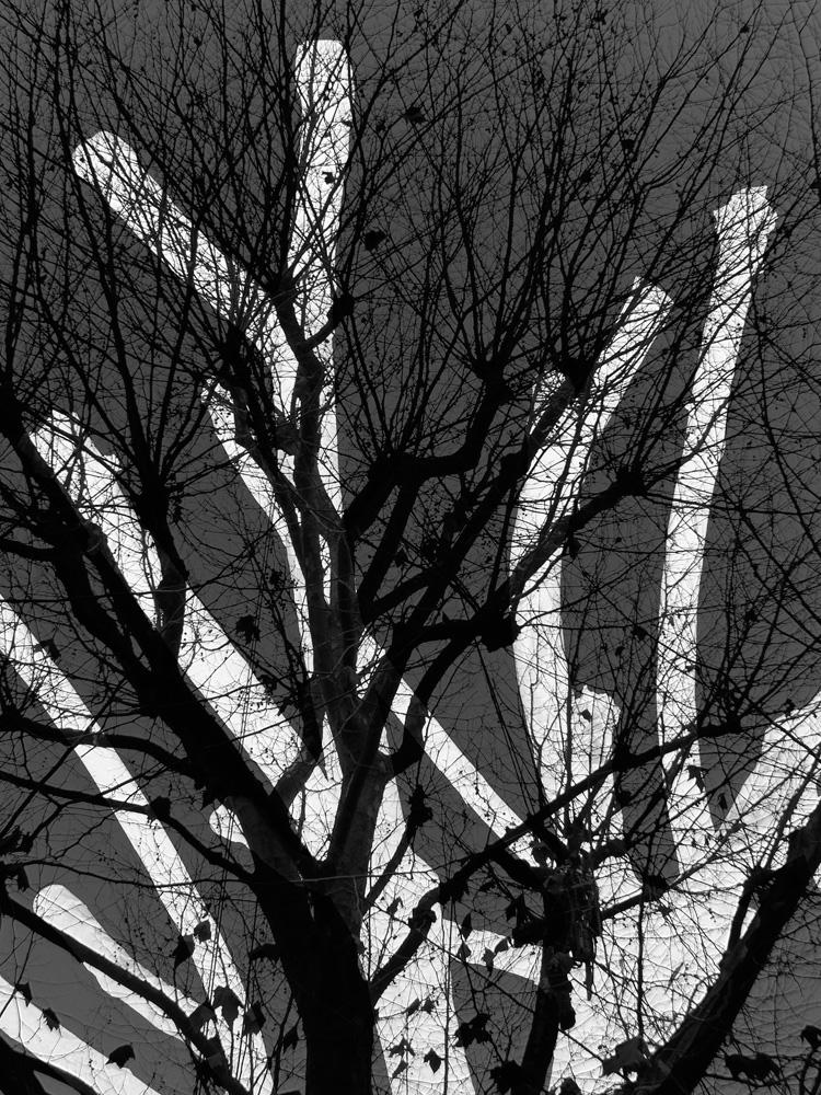 Tree-Surgeons-Ludwig-Haskins-01.jpg