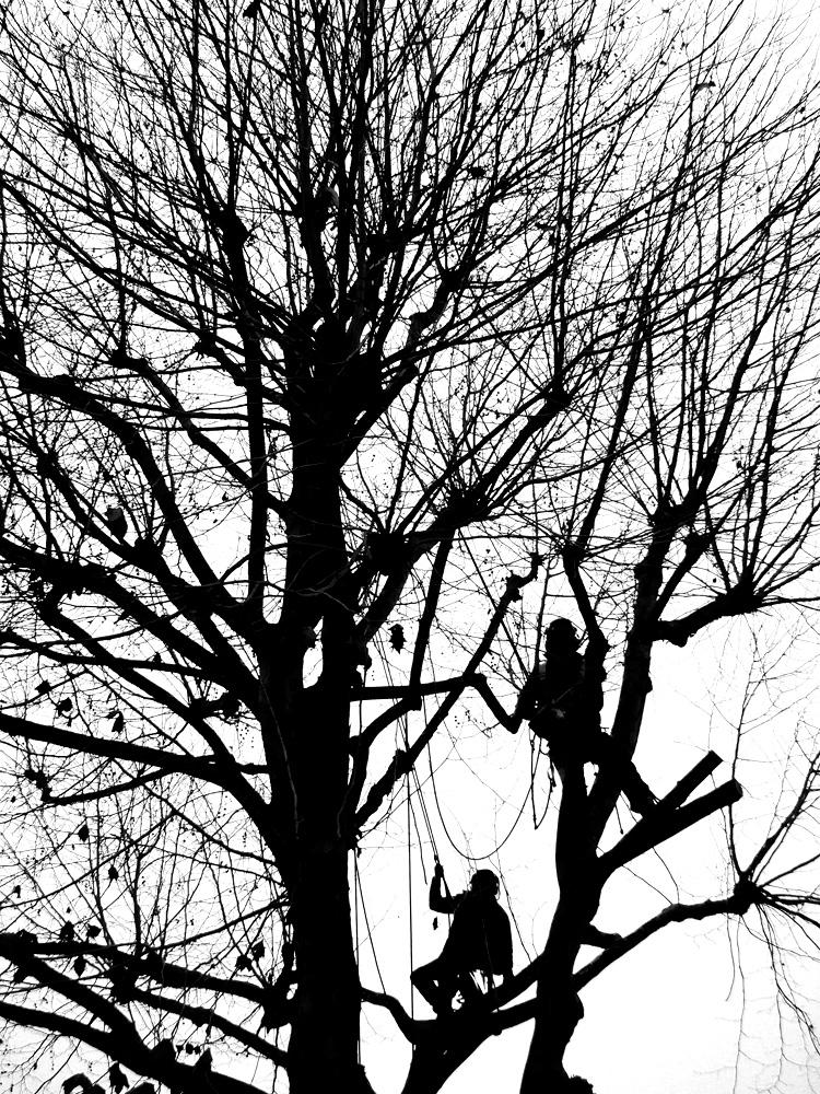 Tree-Surgeons-Ludwig-Haskins-02.jpg