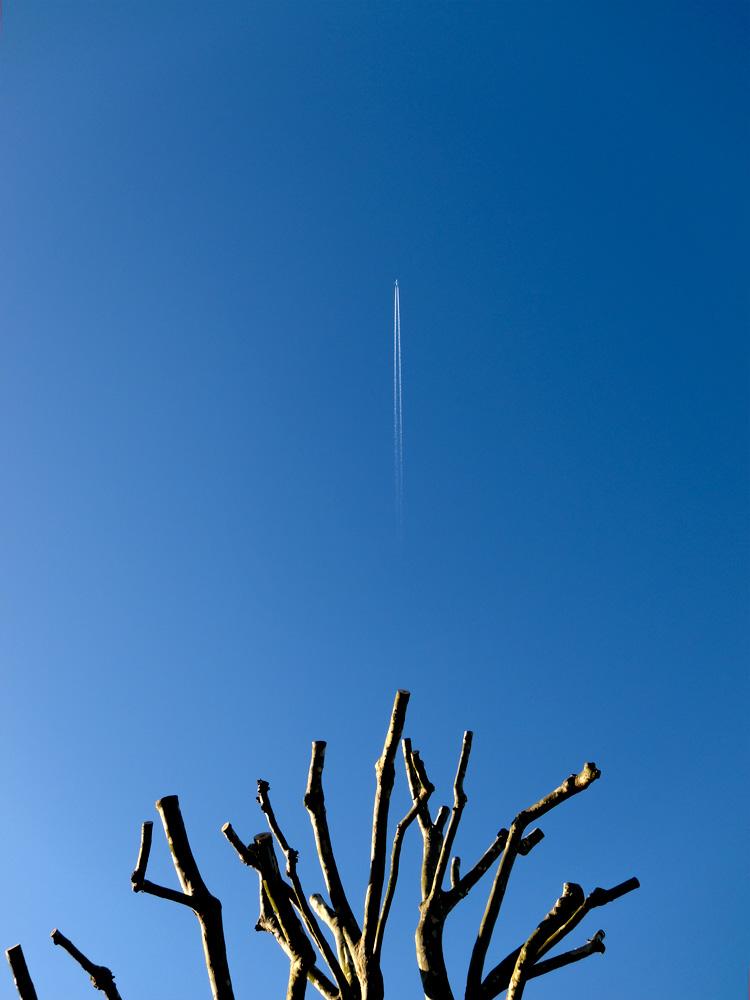 St-James-Road-Trees-Ludwig-Haskins-04.jpg