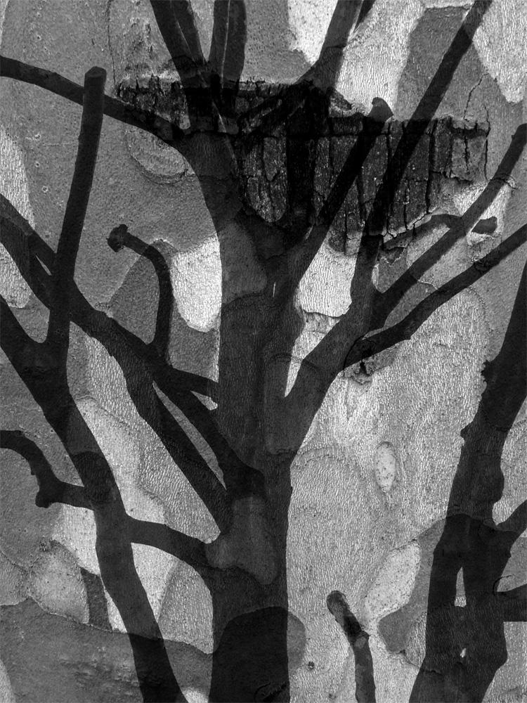 St-James-Road-Trees-Ludwig-Haskins-05.jpg
