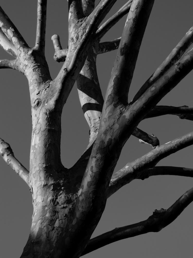 St-James-Road-Trees-Ludwig-Haskins-06.jpg
