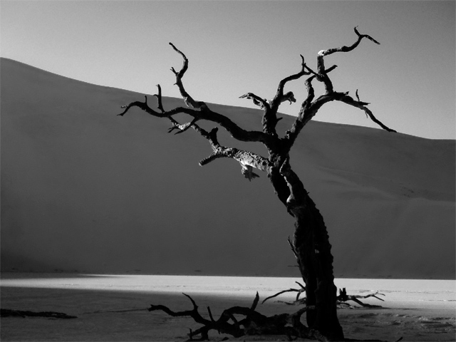 Dead Vlei Tree Ludwig Haskins