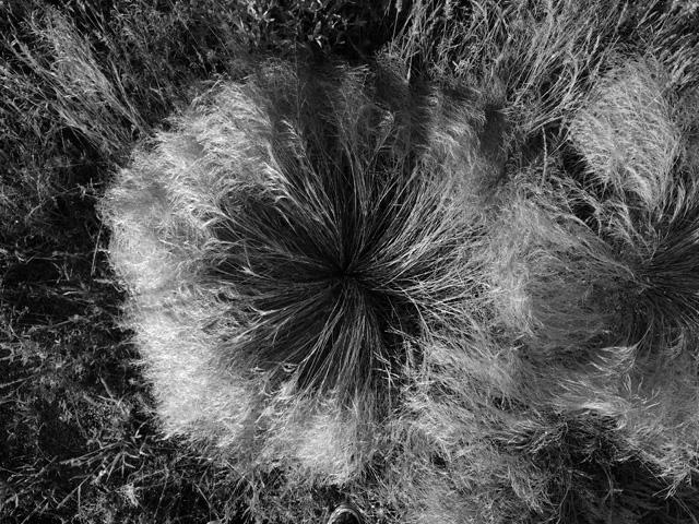 Grasses at Dawn 01 Ludwig Haskins