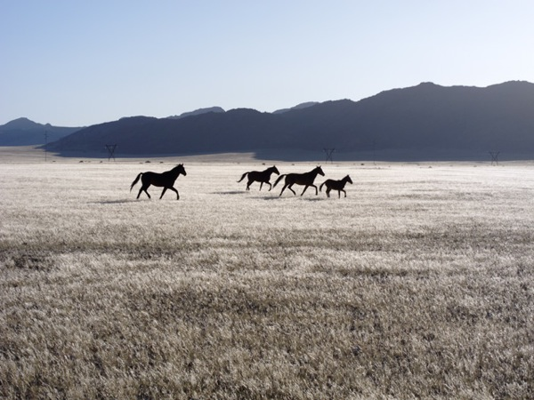 Horses CU 03