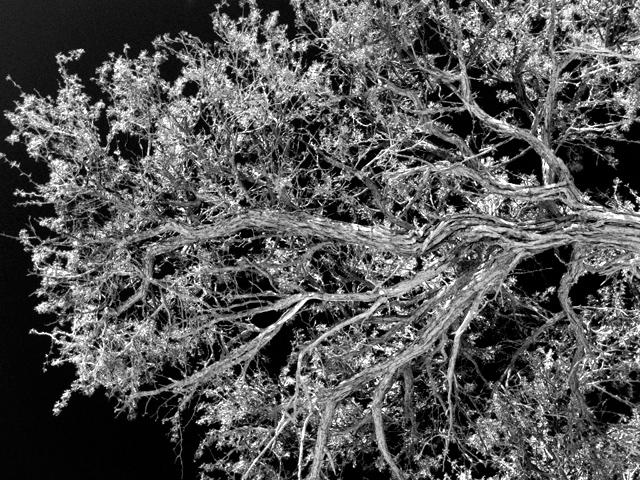 Tree Branch Dead Vlei 01 Ludwig Haskins