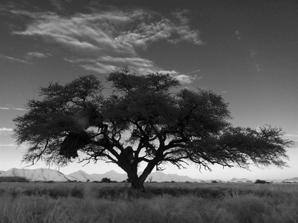 Tree at Dawn 03 Ludwig Haskins
