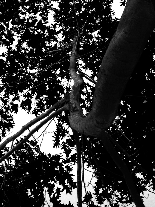 Trees Nonsuch Park B July 10 2011 Ludwig Haskins