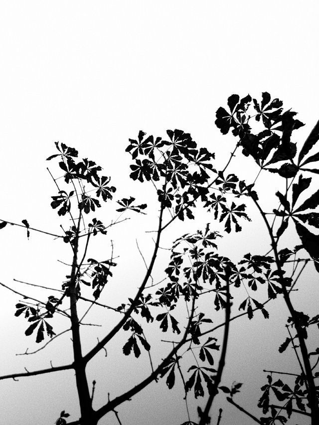 Nonsuch Late Autumn Leaves 03 BW