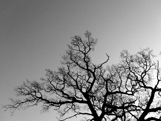 Nonsuch Trees 03 2011 12 09 BW