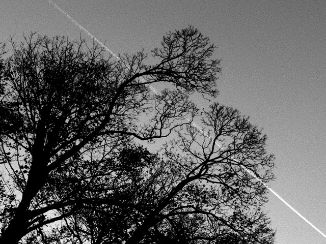 Tree with Vapour Trail BW